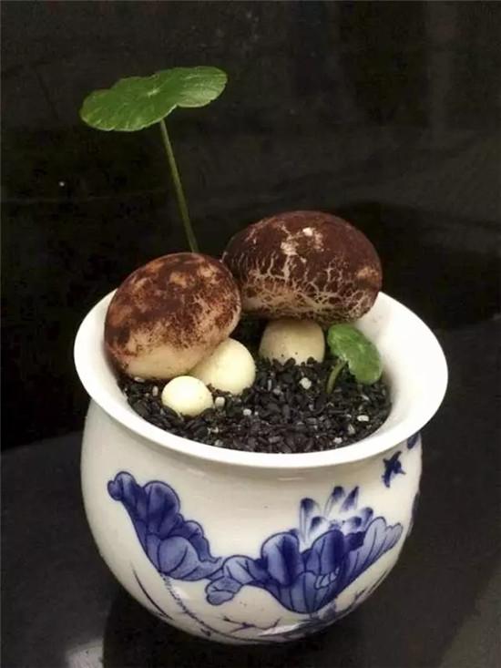 【海派菜】茉莉烘奶盆栽