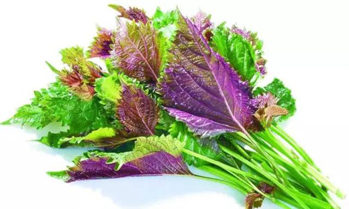 【紫苏】在中国生根,在外国扬名的特色香料