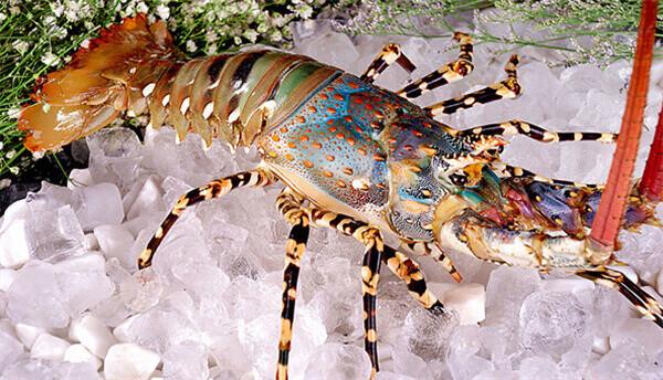 【海鲜】盘点香港海鲜市场的顶级海鲜食材