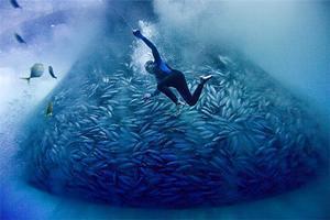 【鲣鱼】舞动在味蕾上的灵魂——鲣鱼