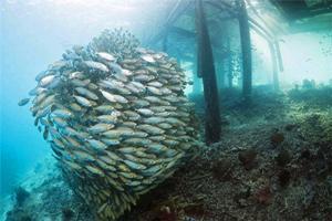 【竹荚鱼】夏季,竹荚鱼正当季——竹荚鱼