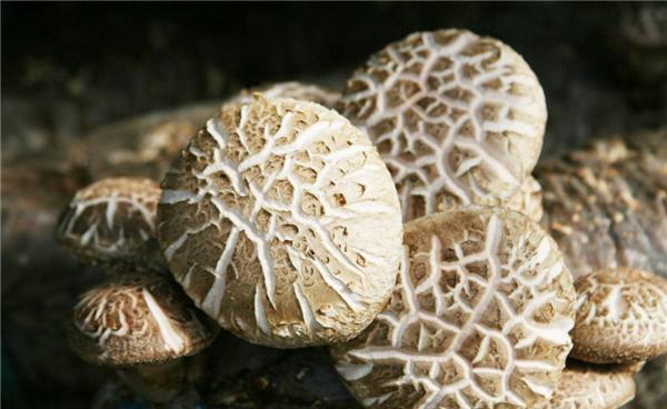 【花菇】香菇中的上品——花菇