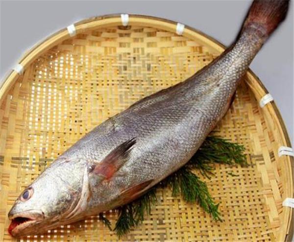 【黄姑鱼】会发出声音的鱼——黄姑鱼
