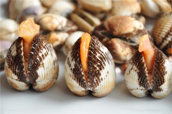【蛤蜊】六月的蛤蜊,鲜的眉毛都掉下来了