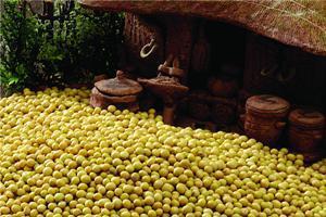 【黄豆】一斤黄豆等于三斤肉?